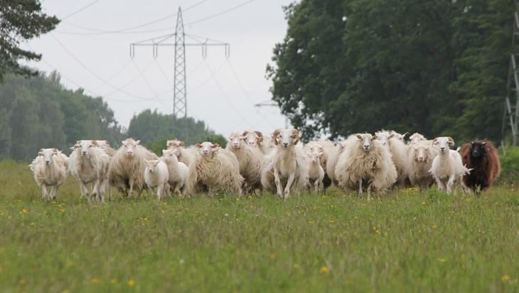 Die Schafherde von Marcus Fiske; Bild:  DB AG