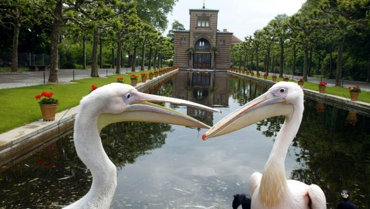 Pelikane am Langen See der Wilhelma © Wilhelma