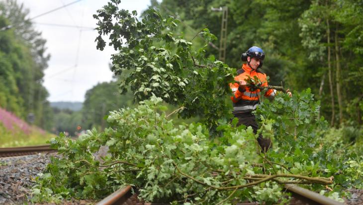 Förster kümmern sich um die Bäume; Bild: DB AG/ Oliver Lang (DB151977)