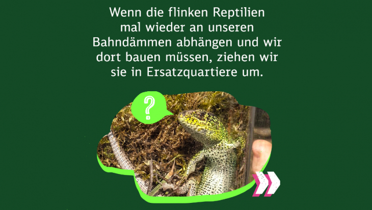 Eidechsen umsiedeln; Bild: DB AG