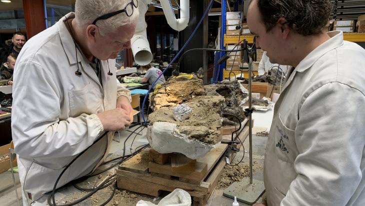 Die Knochen werden freigelegt und untersucht; Bild: DB Schenker_Mario Arnold
