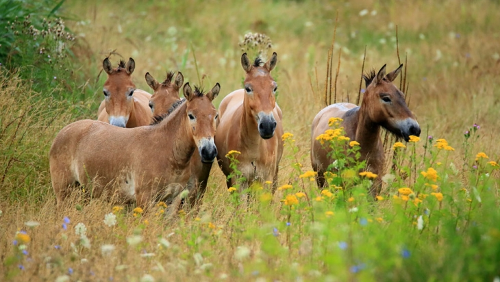 Wildpferde; Bild: DB AG