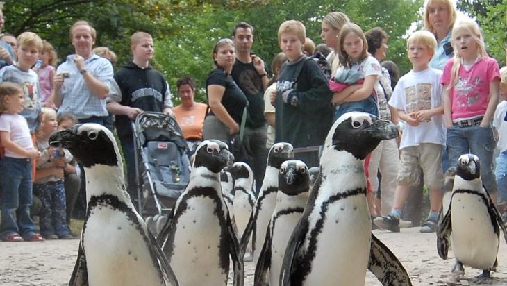 Der Marsch der Pinguine im Allwetterzoo Münster © Allwetterzoo Münster