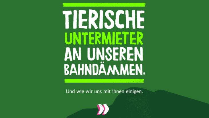 Schlingnattern als Untermieter; Bild: DB AG