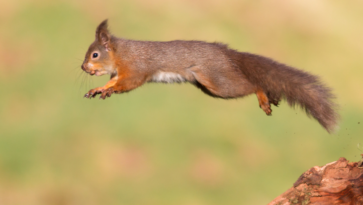 alles über eichhörnchen  olis bahnwelt