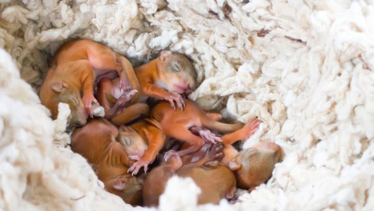 Kleine Eichhörnchenjunge; Bild: Shutterstock.com/Maksimilian