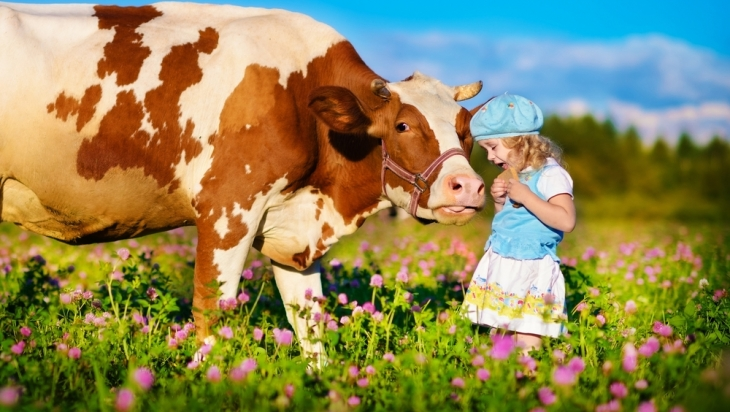 Im Saalachtel trifft man Kühe ©shutterstock.com/Tatiana Bobkova