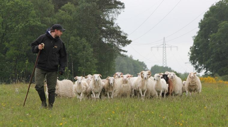 Schäfer Marcus Fiske und seine Herde; Bild: DB AG