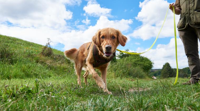 Artenschutzspürhunde; Bild: DB AG / Faruk Hosseini