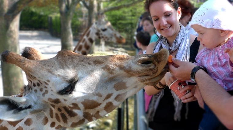 Giraffen füttern im Tierpark Hagenbeck © Hagenbeck