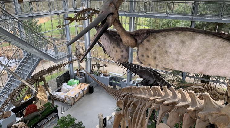 Transport eines riesigen Dino-Skeletts; Bild: DB Schenker/ Mario Arnold