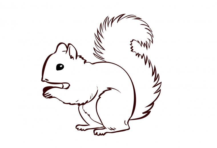 ausmalbild  eichhörnchen  olis bahnwelt