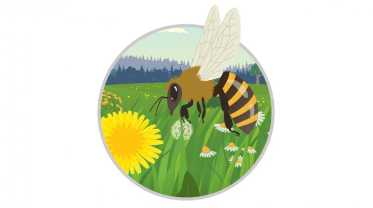 Honigbiene zum Ausmalen; Bild: pic0bird /shutterstock.com