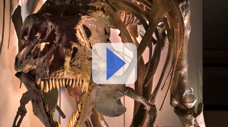 Sieht ganz schön gefährlich aus, so ein T.Rex-Skelett; Bild: DB AG