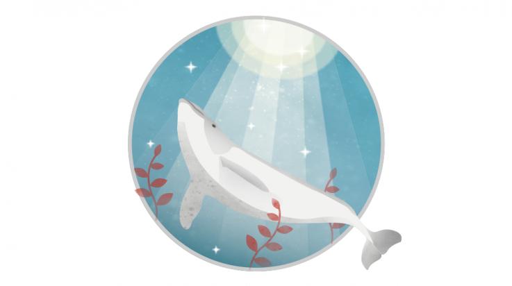 Schweinswal zum Ausmalen; Bild: DB/C3 Visual Lab