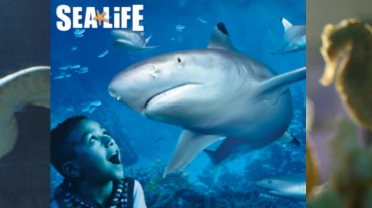 Auf Tauchkurs durch die Unterwasserwelt von Sea Life