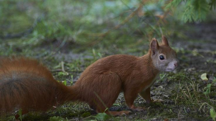 Eichhörnchen; Bild: DB AG/ Faruk Hosseini