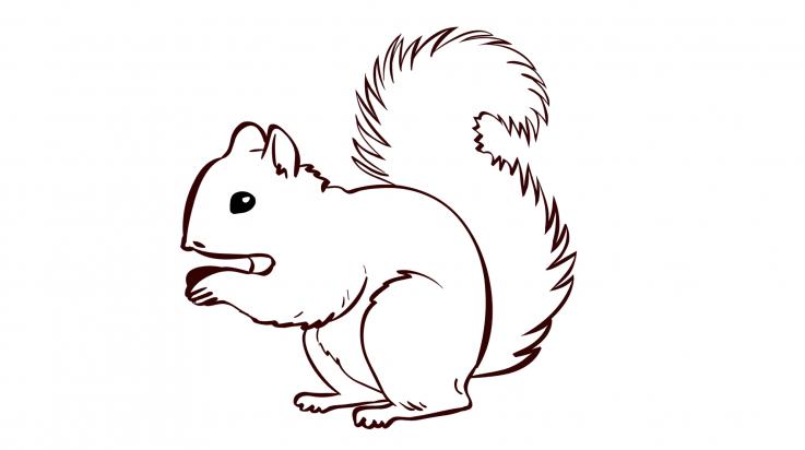 Unterrichtsideen Für Die Eichhörnchen Futterstation