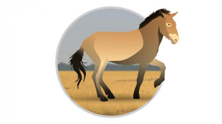 Przewalski-Pferd zum Ausmalen; Bild: DB/C3 Visual Lab